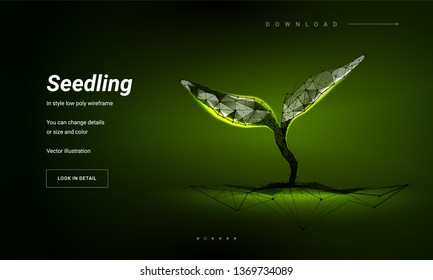 Sprout or seedling.Concept for a startup or start a new life.Abstract illustration isolated on white background. Low poly wireframe. Plexus lines and points in silhouette. Symbol future or innovation