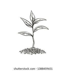 Sprout in sketch style. Garden seedlings, vector illustration.