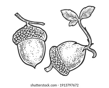 sprouted acorn sketch engraving vector illustration. T-shirt apparel print design. Scratch board imitation. Black and white hand drawn image.