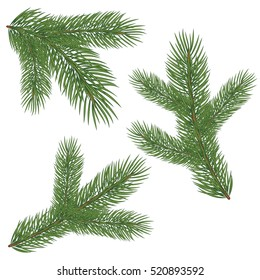 Spruce branch with cones. Vector illustration, isolated on white background. Suitable for creating Christmas cards, New Year presentations, banners