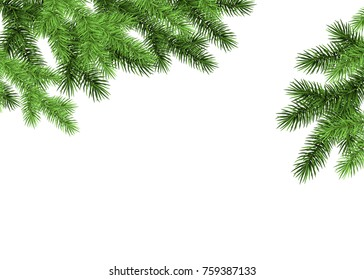 Spruce branch on white background. Green fir. Realistic Christmas tree. Vector illustration for Xmas cards, banners, flyers, New year party posters.