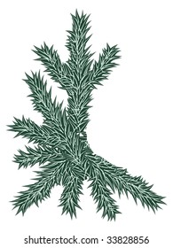 Spruce branch. Vector illustration.