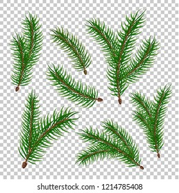 Spruce tree branches set. Vector evergreen realistic fir, pine tree elenents with green needles. Natural forest sprigs for christmas, new year holiday decorating, greeting card transparent background