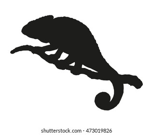Squamate cute old big Chamaeleon isolated on white backdrop. Black ink hand drawn picture sketchy in art retro engraving style. Closeup view with space for text on sky