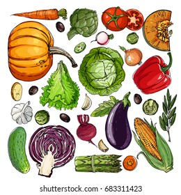 Square of colored vegetables.  Fresh food. Pumpkin, Cabbage, Blockley, kohlrabi, cauliflower, Brussels, beets, asparagus, corn, garlic, tomato line drawn on a white background. Vector illustration.