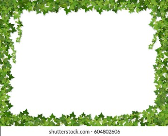 Square decorative frame of ivy branches,  isolated on white background.