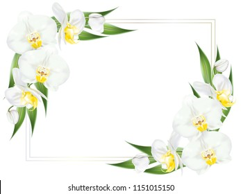 Square frame decorated with branches of tropical orchid flower known as moth orchid or white phalaenopsis orchid blossom with yellow middle and green leaves on white background. Vector illustration.