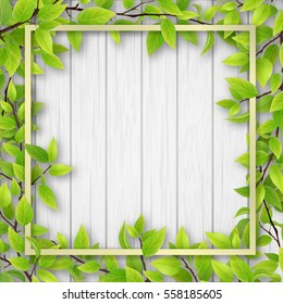 Square frame, overgrown tree branches with green leaves on wooden background. Blank for advertising card or invitation.