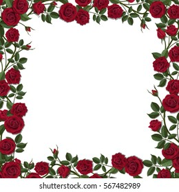 Square frame of red blossom rose flowers. Vector template for greeting card, wedding or Valentine's day.