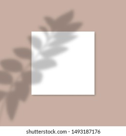 Square Paper Mockup with realistic shadows overlays leaf. Vector Shadow Of A Tropical Plant. Template Flyer, Poster, blank, social media post, logo template in a trendy style