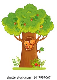 A squirrel sits in a hollow and holds a mushroom in his hand. Vector illustration with cute animal and big tree in cartoon style.