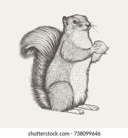 squirrel sketch illustration vector