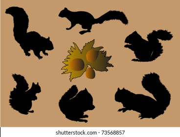 Squirrels and nuts - vector