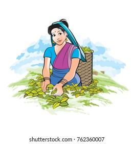 Sri Lankan tea plucking lady with smile in color-vector drawing