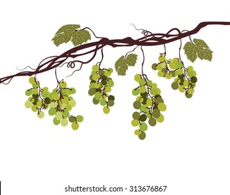 Sstylized graphic image of a vine with green grapes