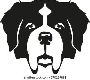 St. Bernard dog head