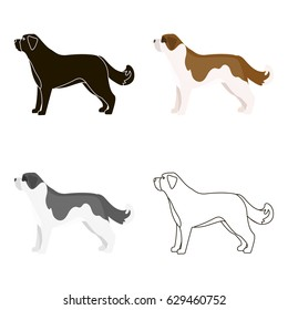 St. Bernard dog vector icon in cartoon style for web