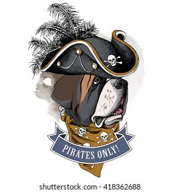 St. Bernard portrait in a Pirates Hat and with neckerchief. Vector illustration.