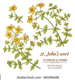 St. John's wort vector set