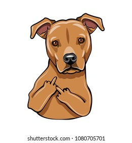 Staffordshire Terrier dog. Middle finger. Dog breed. Vector illustration