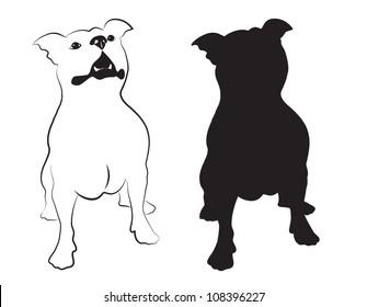 Staffordshire terrier vector