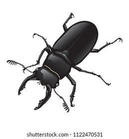 Stag beetle, Lucanus,  Lucanus_maculifemoratus vector