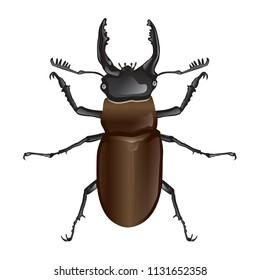 Stag beetle, Lucanus,  Lucanus maculifemoratus vector