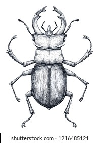 Stag beetle tattoo art. Lucanus cervus. Family Lucanidae.Dot work tattoo. Insect. Symbol of authority, strength, power and nobility.