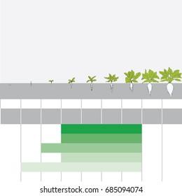stage of grain growth, illustration, vector, Sugar beet