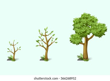 stage of growth of the tree
