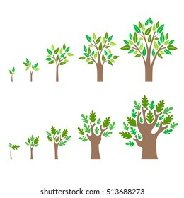 Stage Growth of a Tree Set. Concept Development Flat Design Style. Vector illustration of seed to plant with leaf, diagram of growing oak and apple tree. Five stage of life