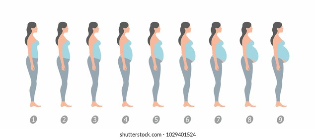 stages of changes in a woman's body in pregnancy on white background