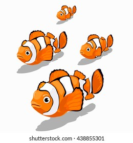Stages of growth and maturation of clown fish isolated on white background. Vector illustration.