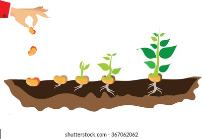 stages of growth of plant and seed to tree