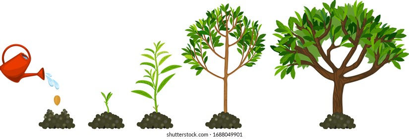 Stages of growth of tree. Life cycle of tree: from seed to large tree with green leaves isolated on white background. Watering the plants