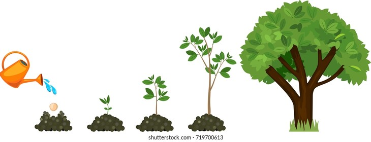 Stages of growth of a tree from a seed. Life cycle of a tree: from seed to large tree. Watering the plants