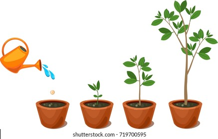 Stages of growth of a tree from seed. Watering plants in a pot