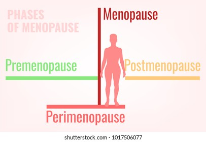Stages of menopause. Premenopause, perimenopause and postmenopause. Simple medical infographic useful for an educational poster graphic design. Vector illustration.