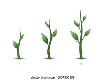 Stages of plant growth. Green sprout grows from the ground isolated on white background. Vector illustration.