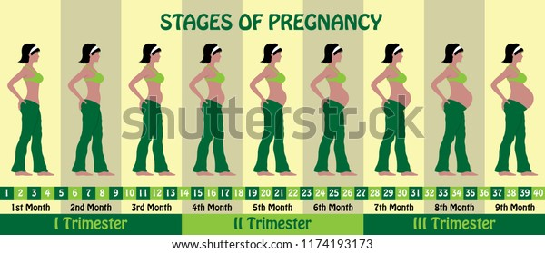 Stages Pregnancy Pregnant Woman Wears Bra Stock Vector