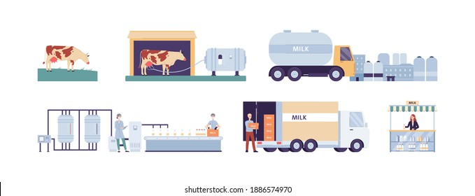Stages of production and distribution of cows milk, flat vector illustration isolated on white background. Production of packaged milk at a dairy or creamery factory.