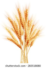 Stalks of wheat ears. EPS 10 vector file included