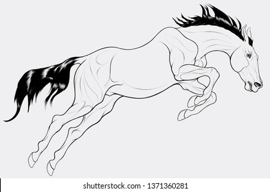 The stallion overcomes an obstacle in a powerful jump, craned its neck forward, laid his ears back. Linear Illustration of a running steed. Vector clip art and design element for equestrian goods.
