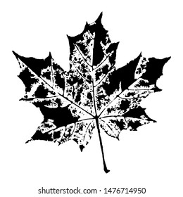 Stamp of asymmetric maple leaf, isolated on white background. Natural ink imprint of autumn leaf with streaks and texture. Overlay template. Vector illustration