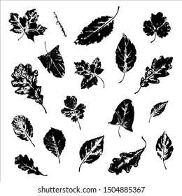 Stamp of leaves set: maple, oak, birch, spruce branch and others. Black isolated objects on a white background. Autumn. Template. Silhouette.