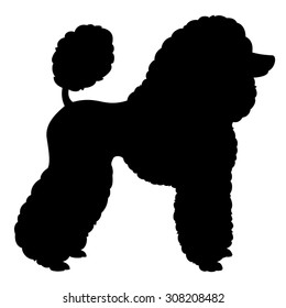 Standard Poodle with Scandinavian clip - purebred dog standing in side view - vector silhouette isolated