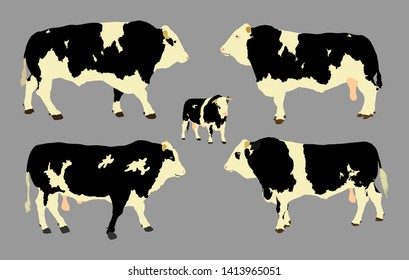 Standing adult bull vector illustration isolated on gray background. Holstein Friesian cow. Breeding bull.  quality genetic material for insemination.