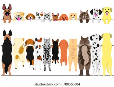 standing dogs and cats front and back border set