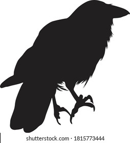 Standing Hawaiian Crow On a Back View Silhouette Found In Hawaii