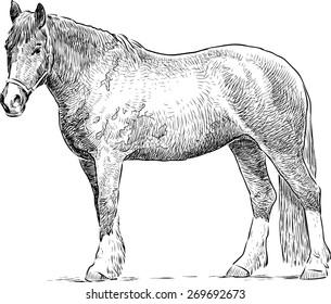 standing horse